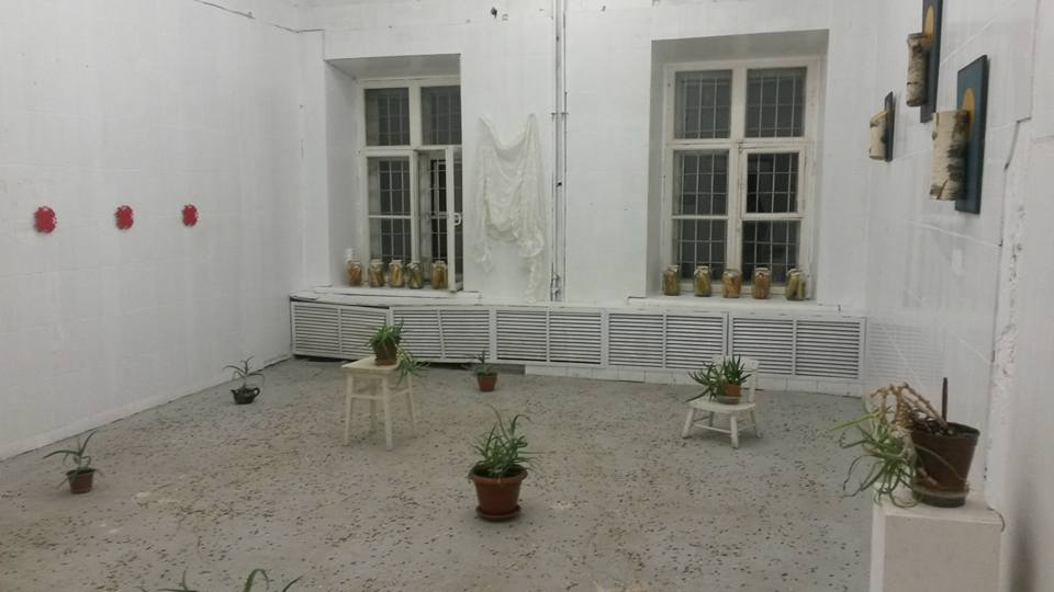 Горшки с алоэ заняли почти все выставочное пространство (фото из архива Анны Третьяковой)