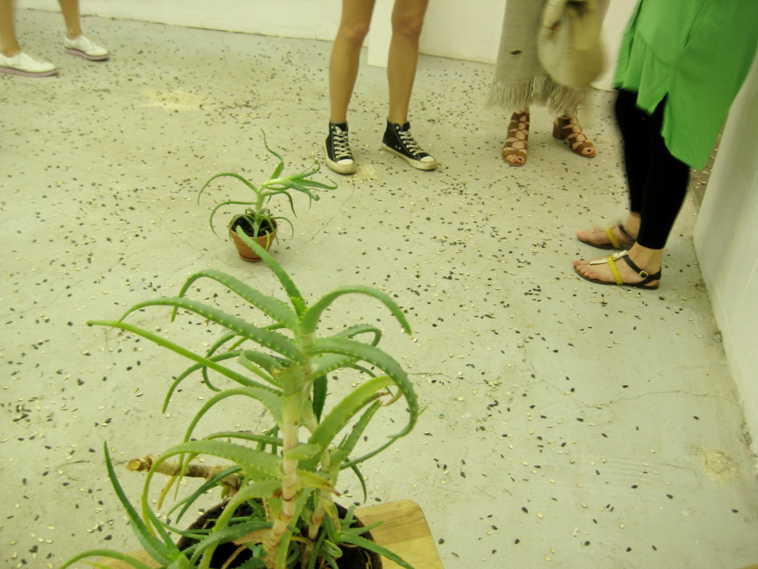 Художница полгода грызла семечки для своего проекта