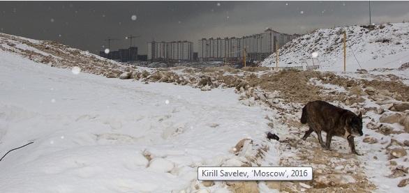 Работа Кирилла Савельева, приобретенная