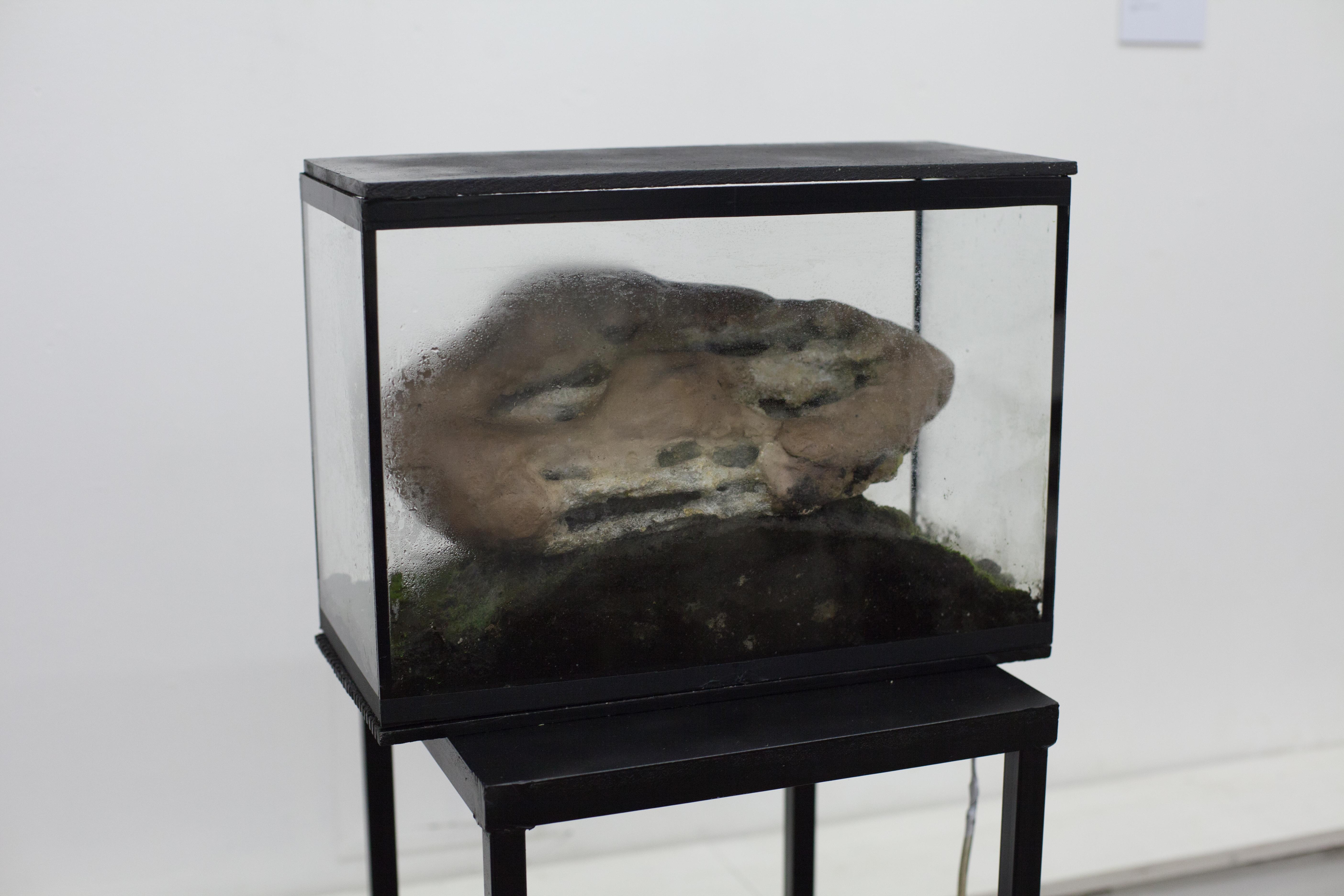 """В работе """"Изолят"""" Вика Журавлёва экспериментировала с органическими и неорганическими материалами"""